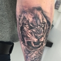 Realism Lion Tattoo