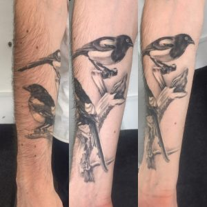 Healed realism Magpie Tattoo by Iaint Nosaint at I Ain't no Saint, Abbots Langley, Hertfordshire